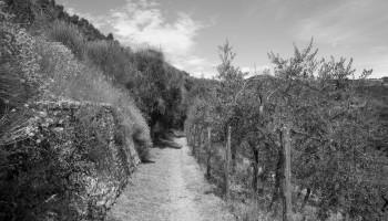 """""""Terra e territorio"""" la foto del mese di Livia Sperandio"""